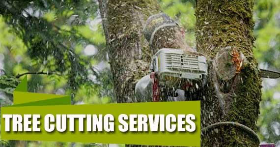 tree-cutting-services-redmond